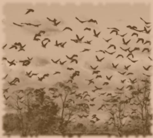 swarm | Claw / Claw / Bite